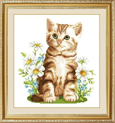 Summer kitten (ไม่พิมพ์ลาย)
