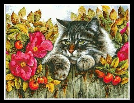 Rose from cat (พิมพ์ลาย)