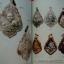 หนังสือคนรักพระ หลวงปู่บุญ หลวงปู่เพิ่ม thumbnail 3