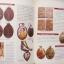 หนังสือลานโพธิ์ หลวงปู่สรวง เทวดาเล่นดิน แถมDVD หนึ่งเดียวที่มีการบันทึกไว้สมัยหลวงปู่สรวงยังมีชีวิต thumbnail 4